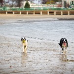 What Does a Dog Look at When it Fetches a Ball- (1 of 1)